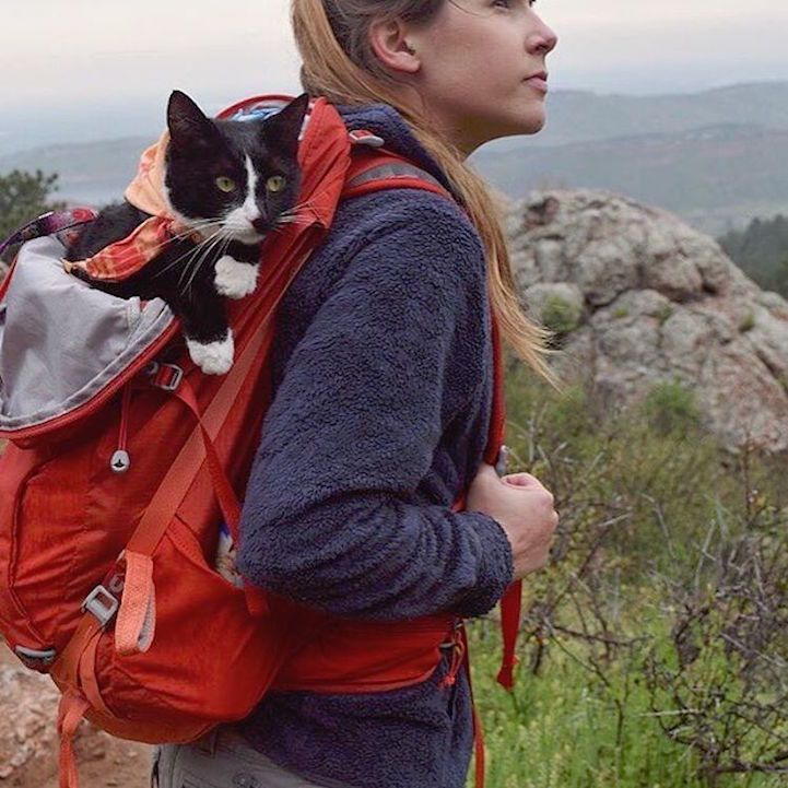 People regularly camp withtheir dogs, but popping a tent with a cat in tow is much less common. There are, however, plenty of felines that enjoy camp