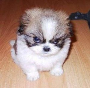 Sintomas de raiva canina