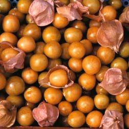 Golden Berry Pineapple - Cape Gooseberry
