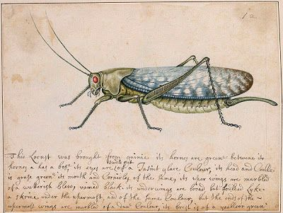 The Marshal Insect Album c1660-1680