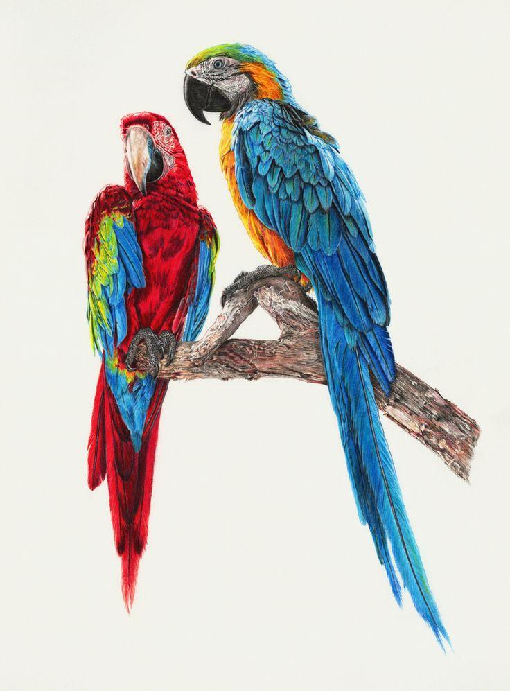 oiseaux-couleur                                                                                                                                                                                 Plus