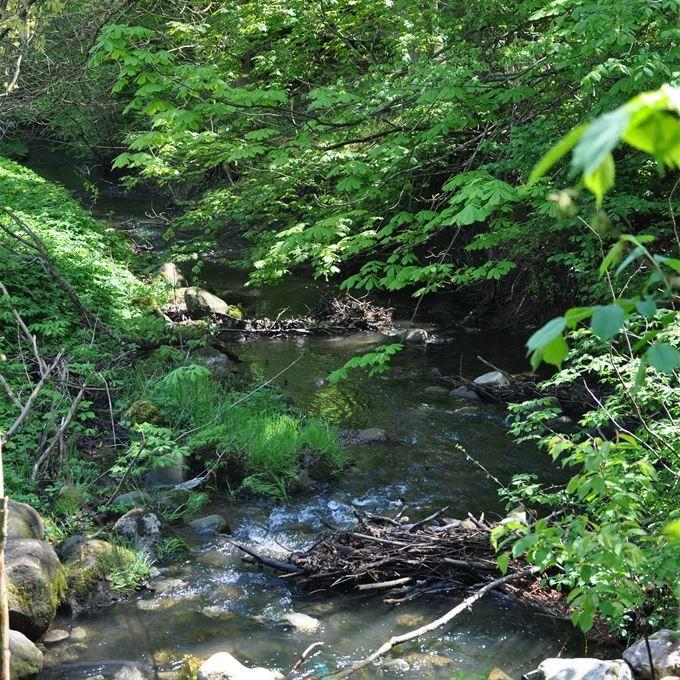 Tomelilla. Skogsbacken är en centralt belägen naturpark som följer Välabäckens sträckning till Väladalen. Här har Tomelillaborna i över hundra år promenerat, mo