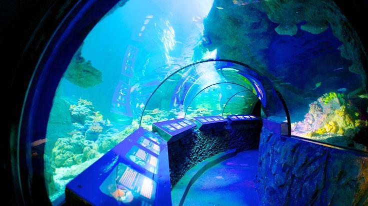 Seit 10 Jahren begeistert das Großaquarium im Olympiapark kleine und große Besucher. Lassen Sie sich von über 33 naturgetreu gestalteten Becken mit insgesamt 700.000 Liter Wasser und unzähligen Bewohnern einer einzigartigen Unterwasserwelt verzaubern. Erleben Sie die größte Hai-Vielfalt Deutschlands in unmittelbarer Nähe zum Olympiaturm. Etwa 4.000 Tiere in über 33 faszinierenden Becken und Aquarien Die neue Sonderausstellung Dinosaurier der Meere! Jetzt eröffnet! Entdecken...