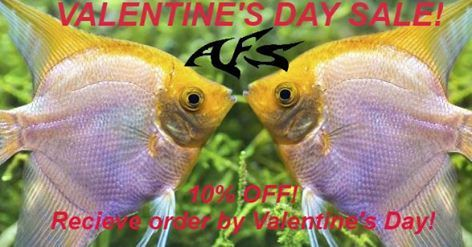 Valentine's Day Tropical Fish Sale!!!,  Order between February 10-13 to receive orders Feb 14th! Offer Code: VS10 at checkout. Aquariumfishsale.com #aquariumfishsale #AqFishSale #tropicalfish #freshwater #fish #fishkeeping #aquaria #freshwateraquarium #colorfulfish #colorfish #Freshwaterfish #cichlid #cichlids #plecos #plecostomus #angelfish #catfish #livebearers #tetras #rams #BettaFish #valentinesday #ValentineGift #ValentineGiftIdeas