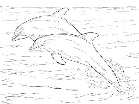 Two atlantic bottlenose dolphins coloring page work for Bottlenose dolphin coloring page