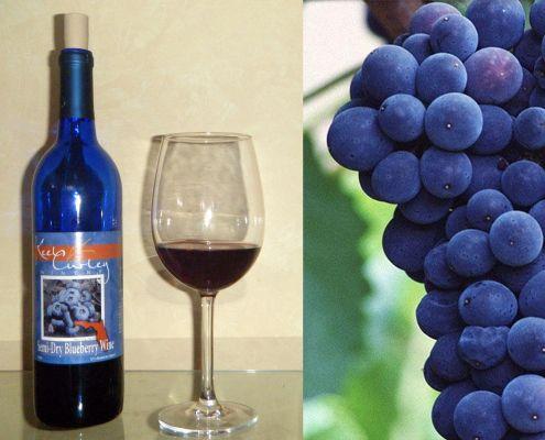 Blueberry Wine - Vino de Arándanos http://honestcooking.es/vino-de-arandanos-por-que-no/