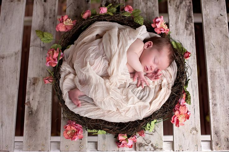 A baby in a nest ❤️
