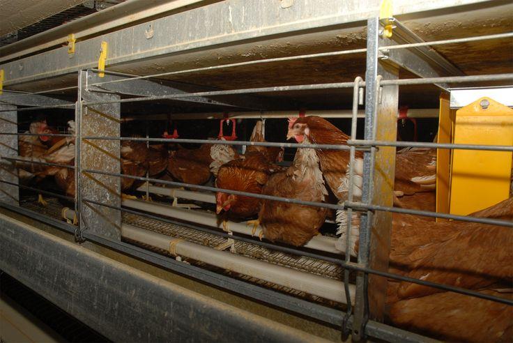 """""""Fabbriche di uova"""" è un lavoro svolto visitando 27 allevamenti, per mostrare pubblicamente le condizioni in cui vengono allevate le galline cosiddette """"ovaiole"""", con lo scopo di documentare cosa quotidianamente questi esseri viventi devono sopportare per soddisfare un consumo di uova che ancora molte persone credono privo di crudeltà."""