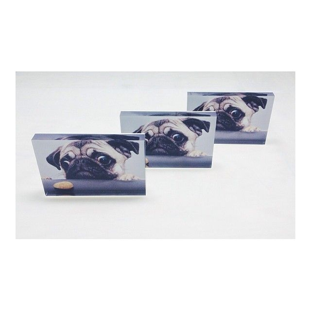 "Art and photography are at the core of what we do...but that doesn't mean we don't also love pets! We made this set of 6""x9"" metallic print FotoBlocks for a customer and wanted to share them with you all. To order your own FotoBlock just drop us a line at info@makemyfotofoam.com. #pets #dogs #pugs #cute #adorable #playful #hungry #family #puppy #vsco #vscool #vscocam #vscophile #whiteborder #nyc #made_in_ny #portrait #2x3 #metallic #print #frame"