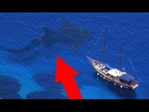 World Biggest Shark Megalodon Caught On Camera
