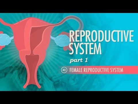 Reproductive System, part 1 - Female Reproductive System: Crash Course A&P #40 - YouTube