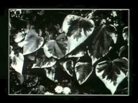 STRAND, Under The Dark Cloth (1989) | documentary