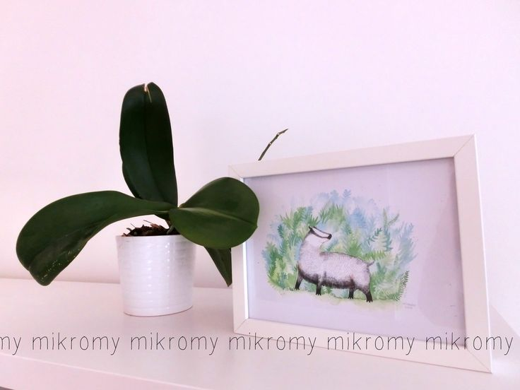 mikromy as home docor. minimal, lovely watercolor!