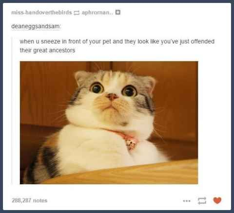 30 Tumblr Posts About Animals That Will Leave You Laughing - BlazePress