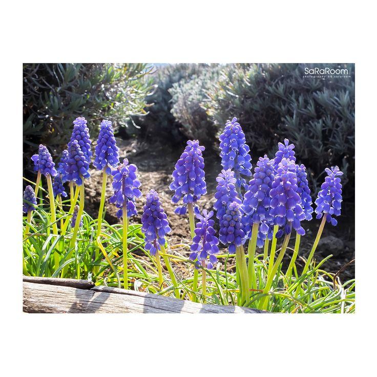 Purple Flower  #flower #nature #photography