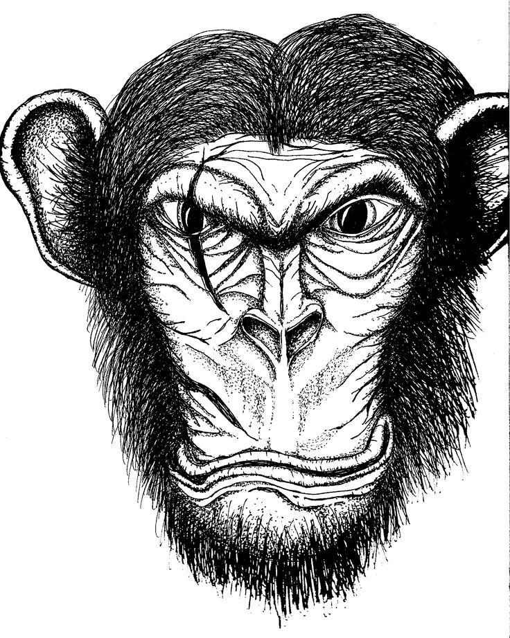 Scarface Chimp: Scarface Chimp