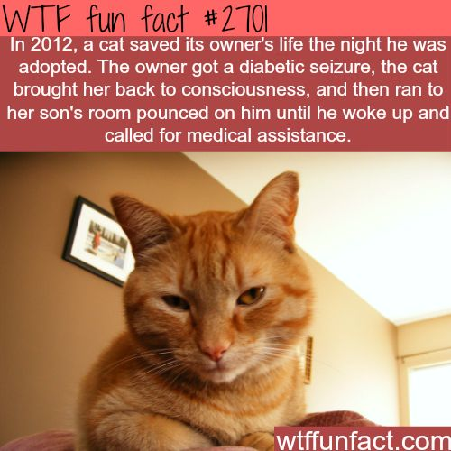 Adopted cat saves it's owners life - WTF fun facts
