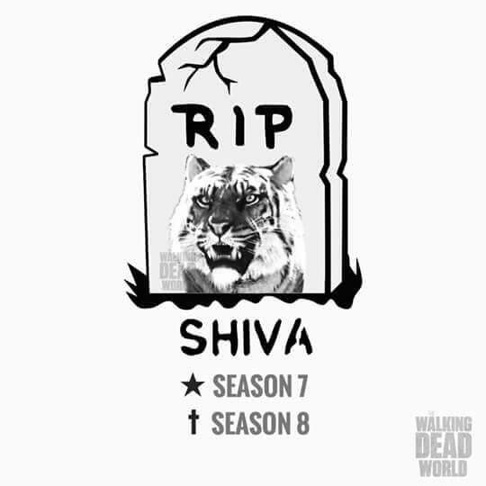 """Shiva the Tiger from the Kingdom in The Walking Dead, S7 Ep02 """"The Well"""" - S8 Ep04 """"Some Guy"""""""