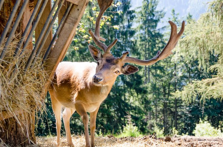 Der Bauernhof Rainguthof ist ein kleiner Streichelzoo mit Nutztieren und Wildtieren:Ziegen, Schweine, Ponys, Esel, Schafe aber auch Hirsche.