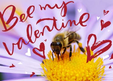 Help Bring Back Bees by giving this NRDC Green Gift https://www.nrdcgreengifts.org/bee-my-valentine