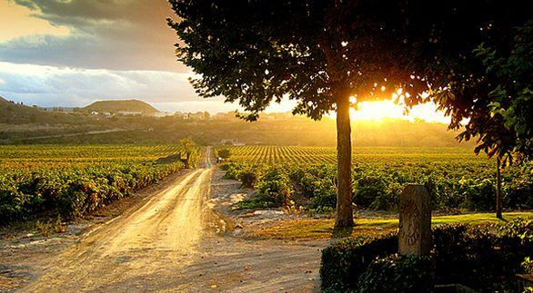 Le noble Contino Rioja Reserva 2010 | Vins | Bouffes