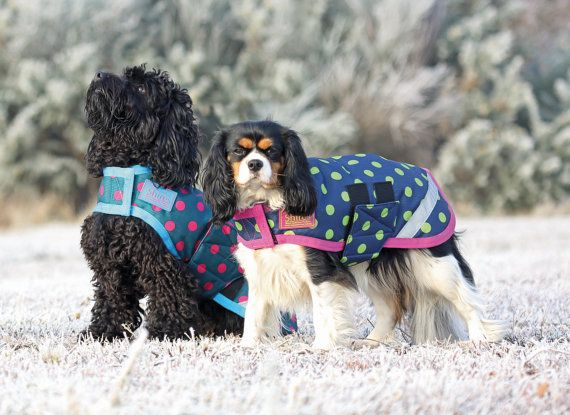 Breathable and Waterproof Dog Coat with warm padded by PearTannery