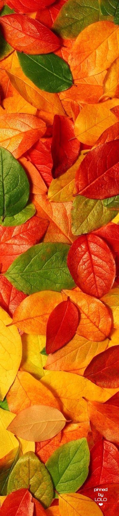 Fall Leaves | LOLO❤︎