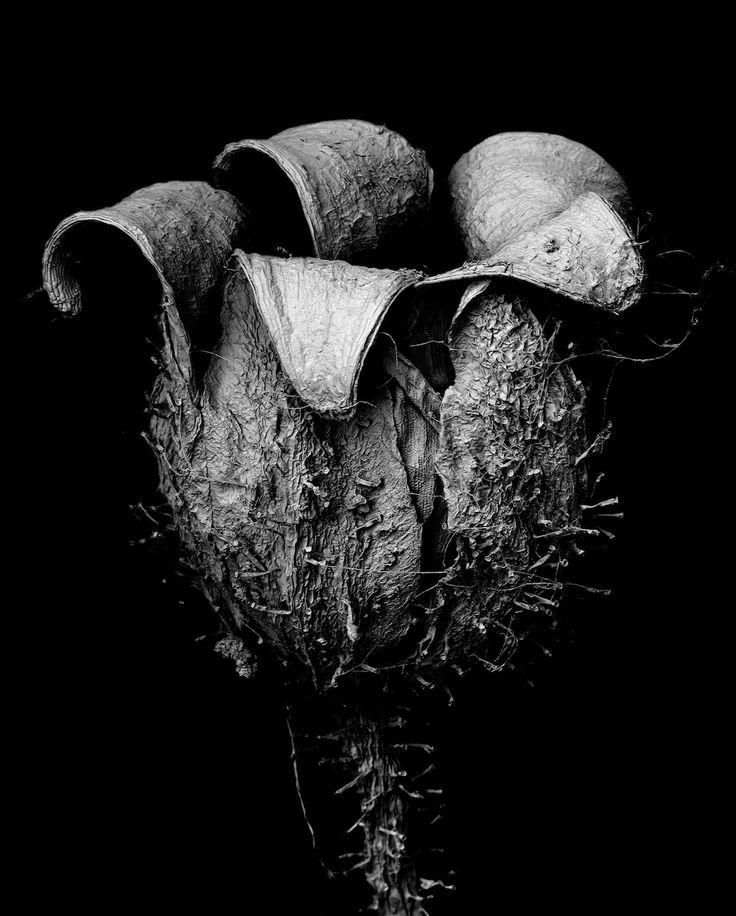 Tomoya Matsuura's series 'Withered #Plants'