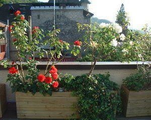 Fabriquer des jardinières en bois (pour les nuls): En Bois, Boi Pour, Des Jardinières, Wood, Les Nuls, Jardinières En, Jardinièr En