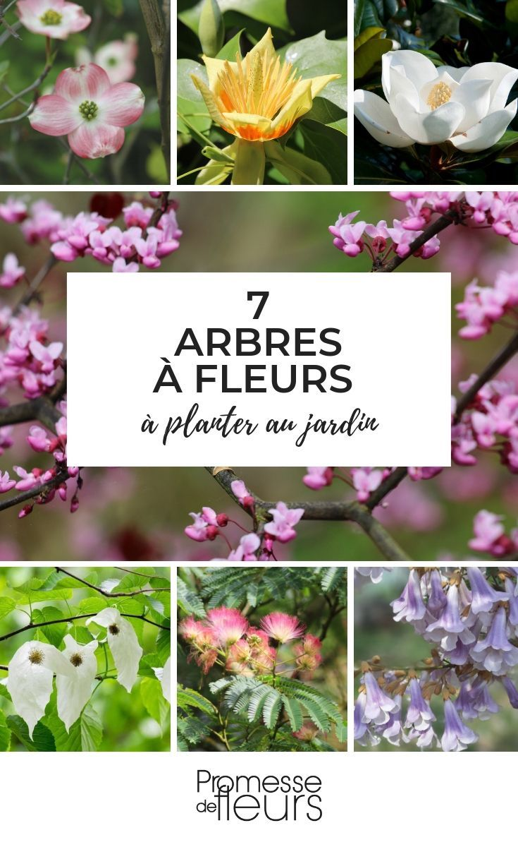 Arbres à fleurs : 7 indispensables au jardin