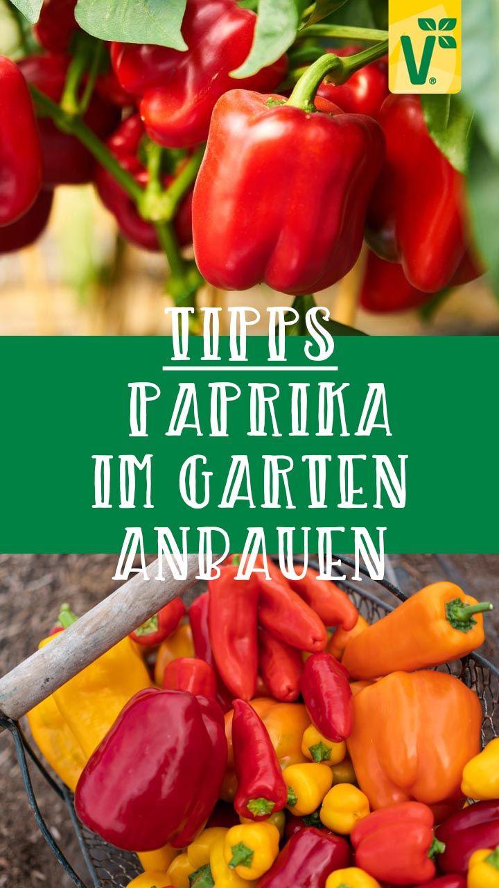 Pin Auf Gartentipps Tipps Tricks Wissen