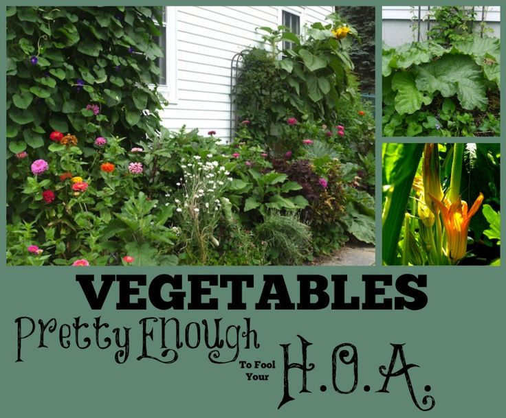 HOA Rules got you down? Guess what? Your garden doesn't have to LOOK like a garden.