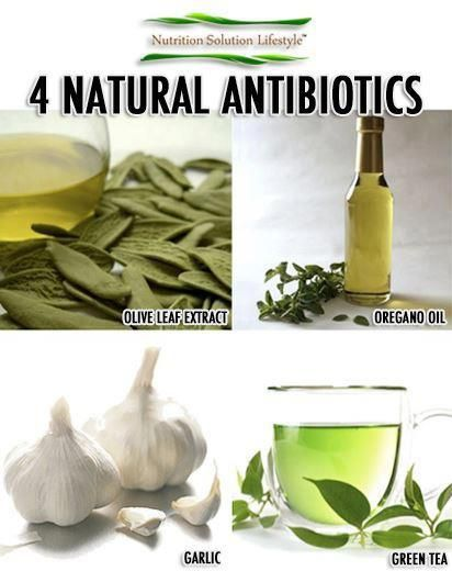 4 natural  antibiotics -  1. Oregano Oil -King of natural antibiotics  2. Olive Leaf Extract–natural ATB & antiviral. w/free radical scavenging abilities, linked w/aging & disease.  3. Garlic–A natural ATB, antifungal, & antiviral agent 4. Green tea – One of the active ingredients in green tea, epigallocatechin gallate (EGCG), has been identified in research as an effective agent against certain strains of oral bacteria.