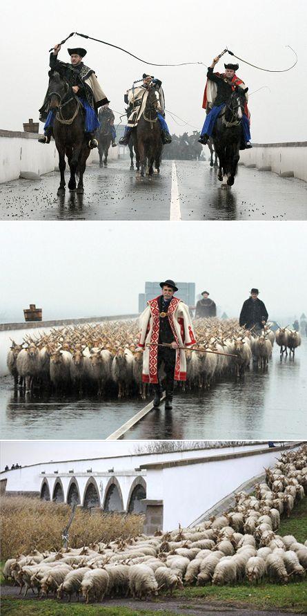 """Hungary - Hortobágy - Nine-holed Bridge - Herdsmen's Advent, """"Driving-In"""" Celebration in November - Behajtási ünnep - Amikor az állatokat behajtják a pusztáról, megrendezésre kerül a hagyományos Behajtási Ünnep - Pásztoradvent elnevezésű rendezvény a Hortobágyi Nemzeti Parkban"""