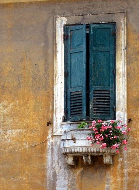 Resultat d'imatges de pelargonia en finestra