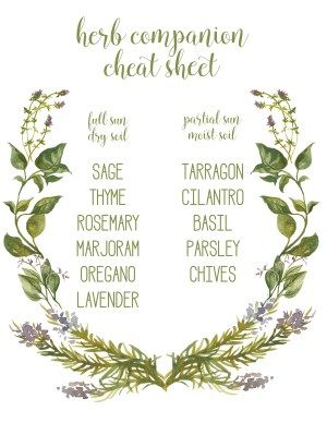 herb companion cheat sheet - mint alone, spreads out!