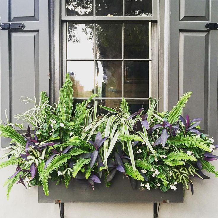 """Eddie Ross on Instagram: """"I'm obsessed with this super chic planted window box! I love the simple mix of low-maintenance plants that give it color and texture. It's that perfectly imperfect perfection. This is definitely something we will try at #edgewoodhall #inspiration #windowbox #gardening #plants #charleston #newhome #mainline"""""""