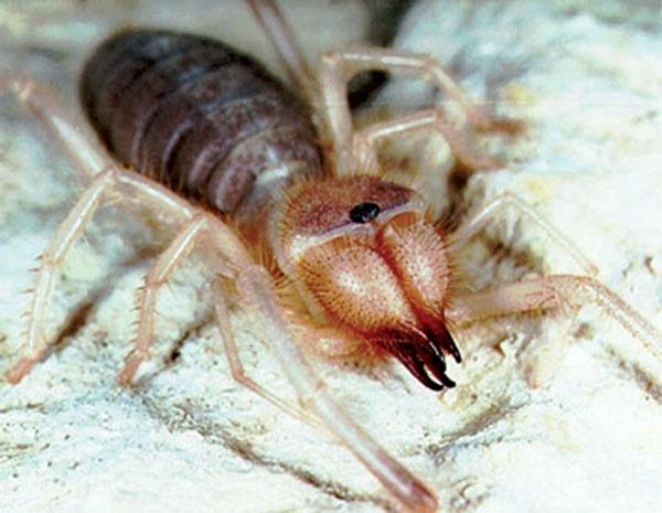 Best Of Cricket Spiders In Basement