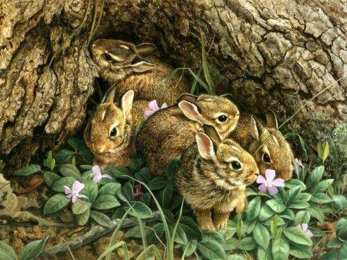 Картины дикой природы (животные). Часть 3. (29 фото) в ...
