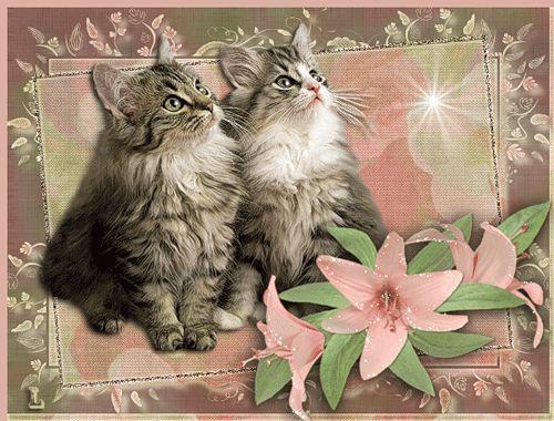 Сибирские котята, Фото животных