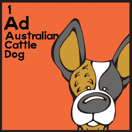 The 1st Elemutt of The Dog Table is the Australian Cattle Dog.  The Dog Table Poster features illustrations of 186 dog breeds. Dogs are organized in a similar layout and structure to the Periodic Table.  #dogsofpinterest #AustralianCattleDog BUY THE DOG TABLE POSTER  http://thedogtable.com