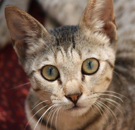Very cute cat