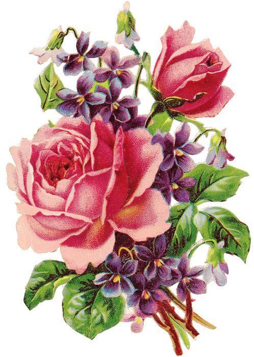 pretty rose and violets clip art