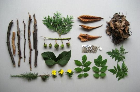 *souvenirs from a walk in the woods, lined up