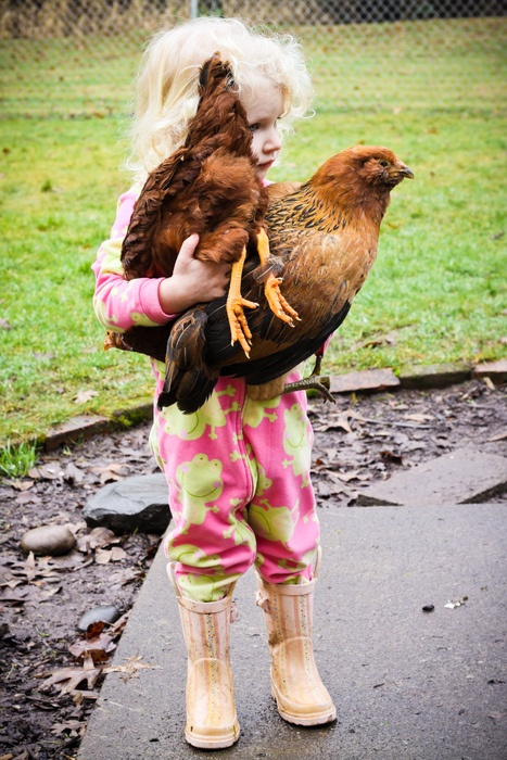 2 great chickens and 1 adorable little girl.