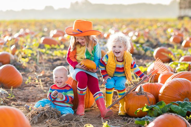 Listed are 15 pumpkin patches in and around the Denver Metro area. Check out the interactive map to find one that