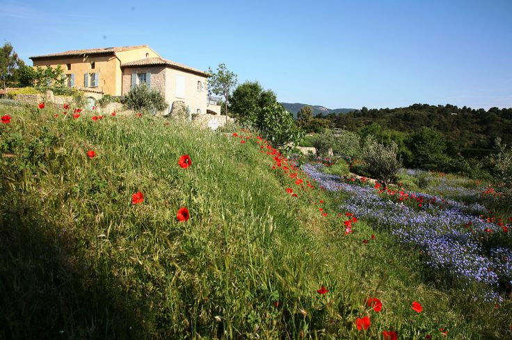 wild flowers in May Tony Stone Garden Provence