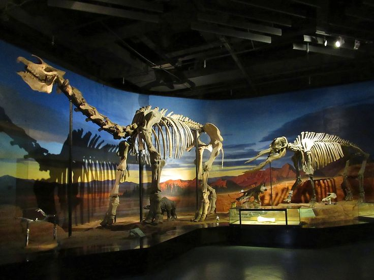 The Turpan Regional Museum in Turpan, Xinjiang, China, has an important palaeontology section. The skeleton on the left is of a Paraceratherium, the largest terrestrial mammal ever known and an early ancestor of the rhinoceros.