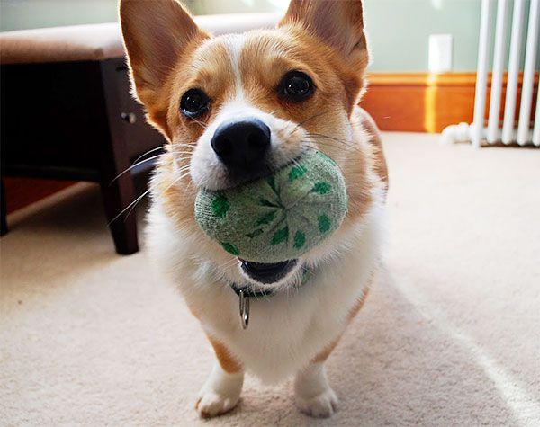 Reciclando brinquedos para cachorro                                                                                                                                                                                 Mais
