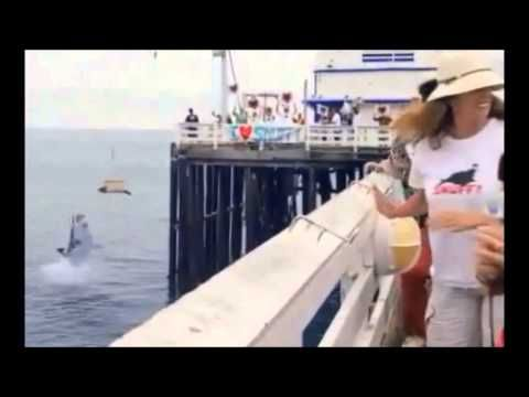 Funny Shark Week Commercial by The Discovery Channel - Snuffy the Seal Becomes Shark Bait - http://videos.linke.rs/funny-shark-week-commercial-by-the-discovery-channel-snuffy-the-seal-becomes-shark-bait/